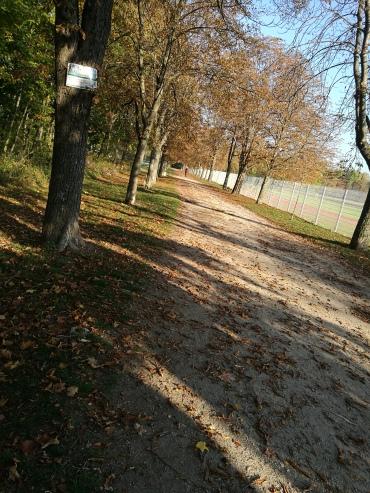 Trainingspause - nur spazieren war angesagt